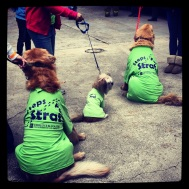 Some of my supporters on Team Steps for Strat this year at the Take Steps Walk!
